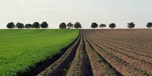 Javni natječaj za prodaju poljoprivrednog zemljišta u vlasništvu Republike Hrvatske