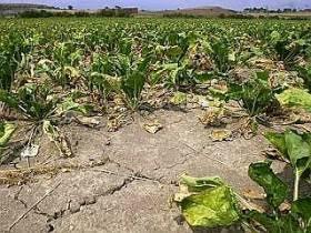Proglašena elementarna nepogoda suša na dijelu područja Koprivničko-križevačke županije